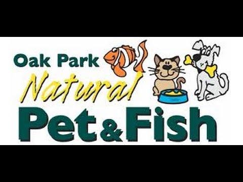 Oak Park Natural Pet & Fish   Chicago Fish Store Episode 3