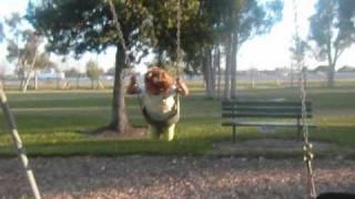 A Kid Falls Off A Swing Set !!!! So Funny!!!!!!