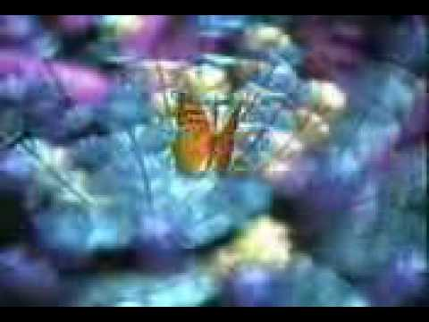 "Global Television Network - ""Butterflies"" ident"