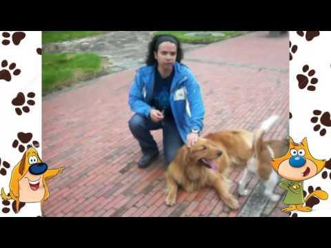 Perrito rescatado | Tu Mascota TV