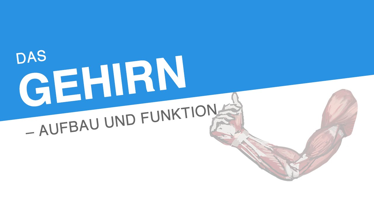 DAS GEHIRN – AUFBAU UND FUNKTION | Biologie | Biologie des Menschen ...