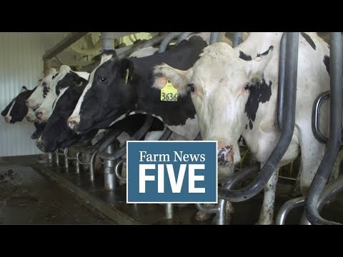 Farm News Five: Growth for dairy