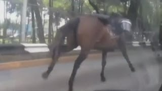 Police horses escape and stampede down Mexico City streets