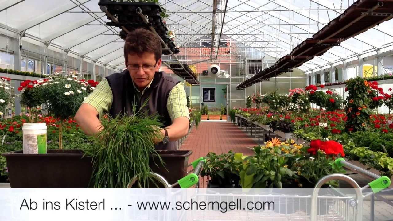 scherngell g rtnereitipp bepflanzen von balkonk sten youtube
