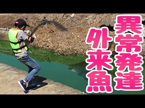異常発達した外来魚 vs 小学生【リスナーさんと釣り 後編】