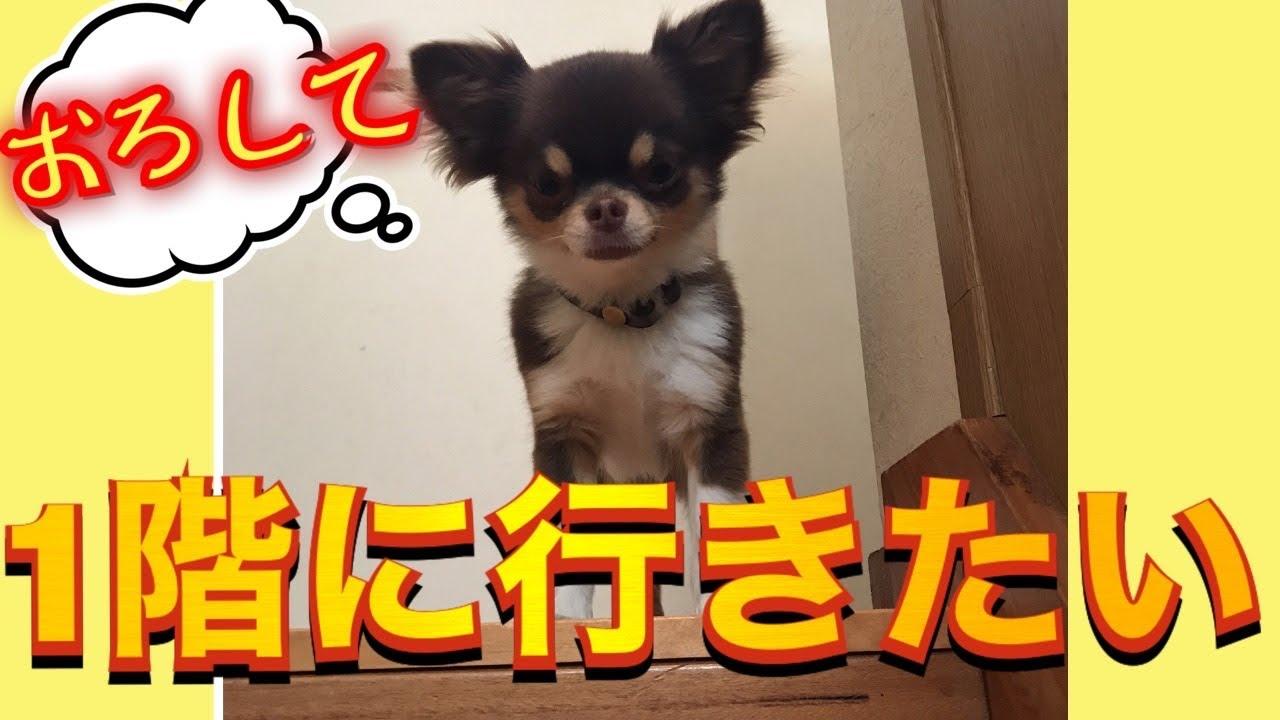 動画 自粛 犬