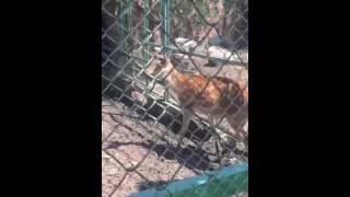 """В """"Тау Дастархане"""" прокомментировали появившееся в Сети фото окровавленного оленя."""