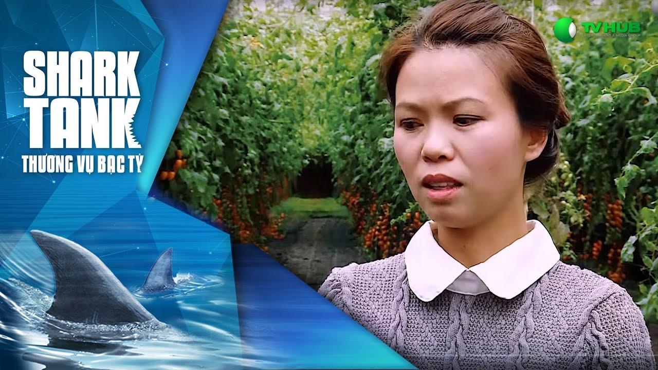 Cà Chua Lại Ngọt - Happy Trees | Shark Tank Việt Nam