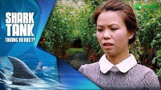 Cà chua lại ngọt ? | Happy Trees | Thương Vụ Bạc Tỷ Shark Tanks Việt Nam