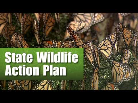 Saving the Monarch Butterfly: Youth and Education
