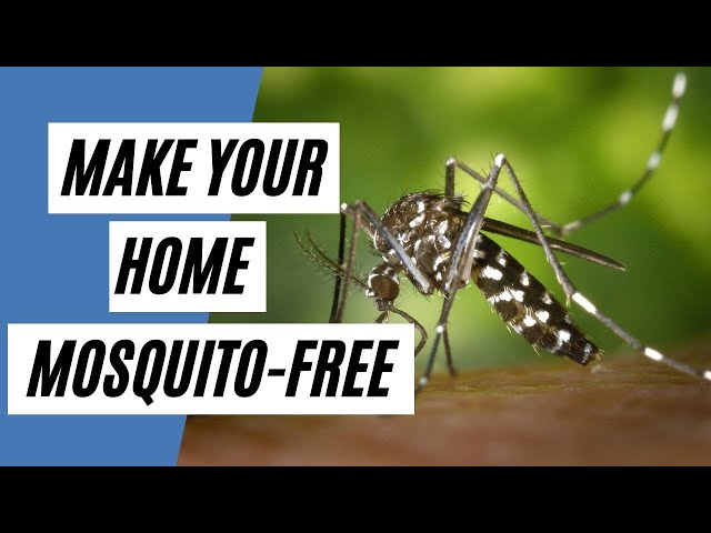 Ways to Make Your Home Mosquito-Free (Tips For Mosquito)