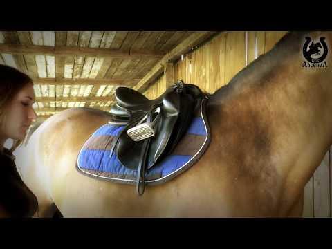 Вопрос: Как запрягать лошадь?