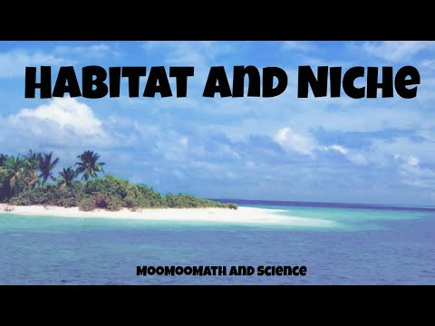 Difference between habitat and niche - ecology