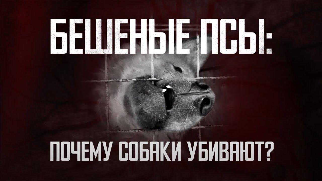 Бешеные псы: почему они убивают и кто в ответе за это?