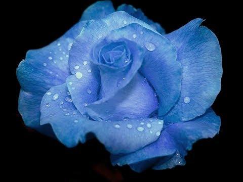 Лечение Цветом! Цветотерапия! Медитация Голубой Полет! Ирина Моругий