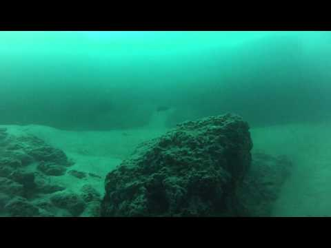 Underwater footage from the Rainbow Channel and east of Wellington Point Moreton Bay