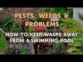 How to Keep Wasps Away From a Swimming Pool