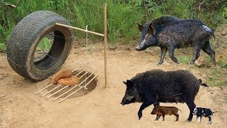 Amazing Quick Wild Pig Trap Using Car Wheel And Deep Hole - How To Make Wild Pig Trap Car Wheel