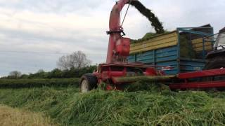 Silage 2014 - Trailed JF harvesting