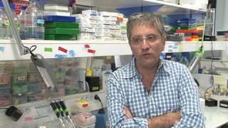 Diabète : une cellule qui produit de l'insuline