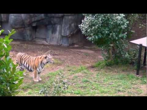 Oakland Zoo California 2012 New Video [HD]