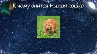 К чему снится Рыжая кошка (Сонник)
