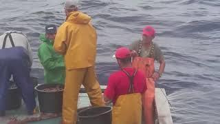 """Pesca do Atum na embarcação """"ATLÂNTICO NORDESTE"""" 10/2017"""