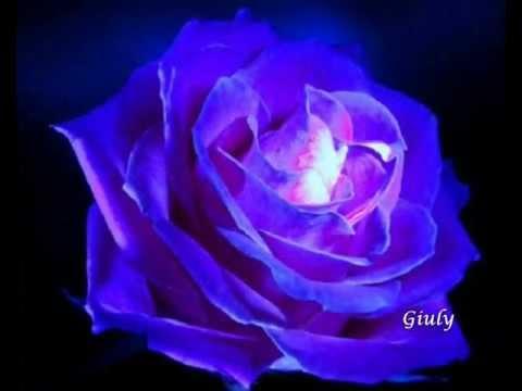 Rose Blu Speciali X Persone Speciali Youtube