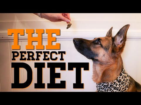 The Perfect Dog Diet   What To Feed Your Dog   German Shepherd