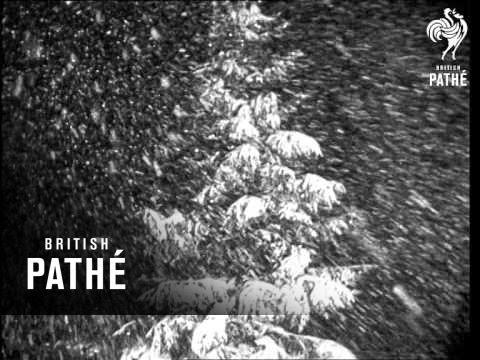 Heavy Snow Blankets East Coast Usa (1949)