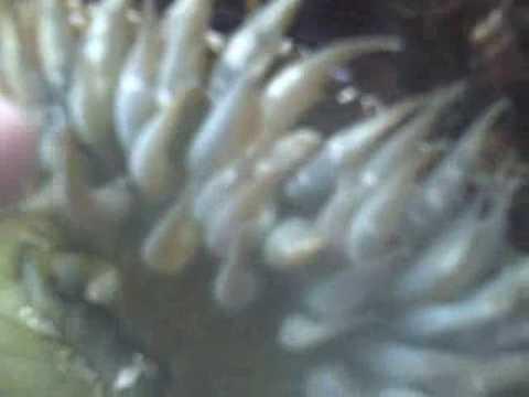 Underwater Natures