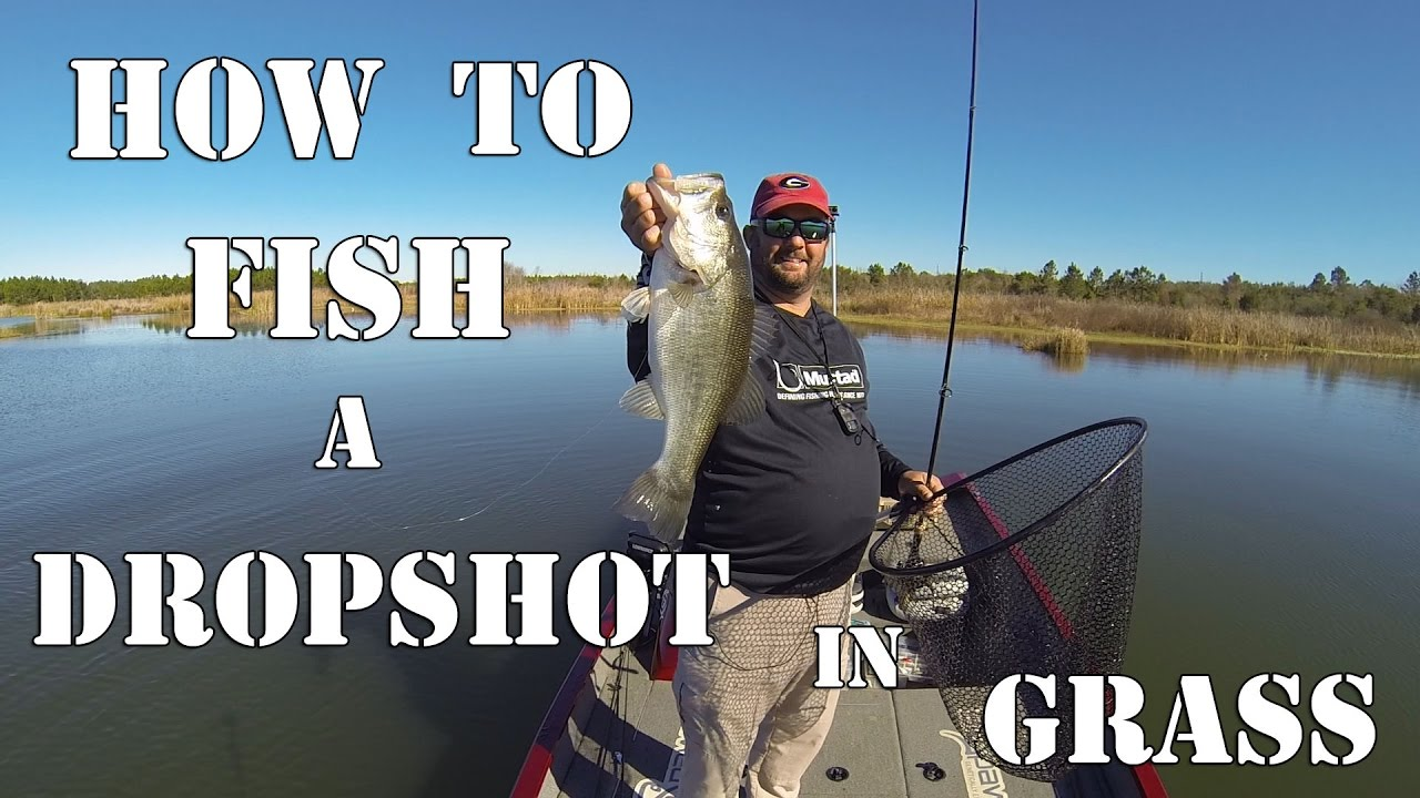 Drop-shot (rigging) - features of equipment and fishing 35