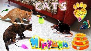 Супер Пупер КлЁвЫе ИГРУШКИ для КОТЯТ!!! Funny Kittens:)))