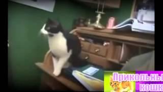 Смешные кошки  Прыжки и падения  Уражться  Смешные кошки жгут