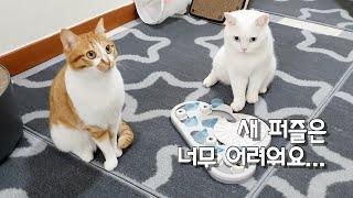 고양이 형제에게 딱맞는 먹이퍼즐을 찾았어요!