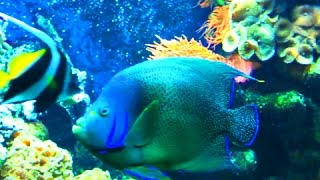 Аквариумные Рыбки для Детей