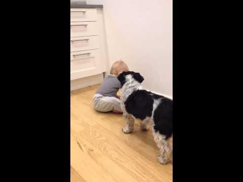 Baby feeding dog