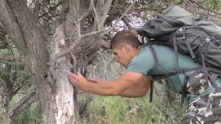 Bear Paw Whitetails -  Traditional Bow hunting Giant Alberta Whitetail