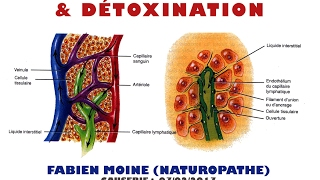 Système lymphatique et détoxination (Fabien Moine)