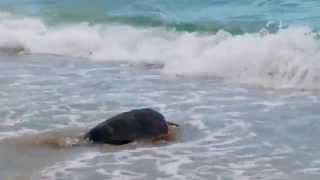 Numana città delle tartarughe