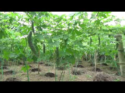 Farm in the Philippines - Naga City, Bicol Region