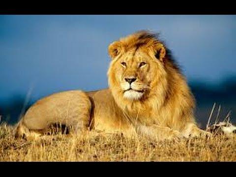 Animals Documentary - Africa Animals eXtreme!! - WILD National Geographic
