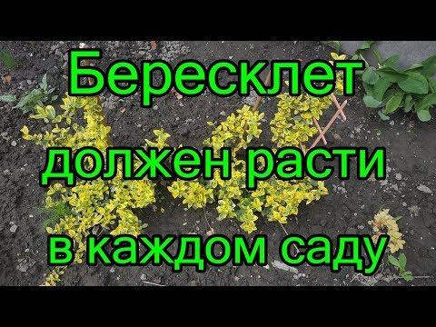 #Бересклет должен расти в каждом саду.