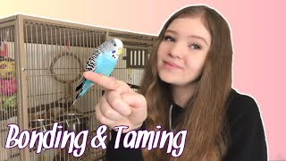 How to Bond With and Tame Your Parrot   Gaining the Trust of a New Bird