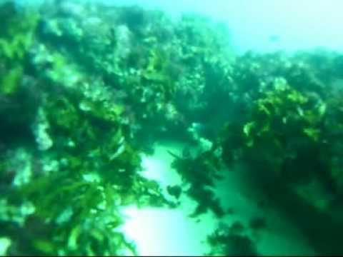 Diving Off Garden Island Wa Youtube