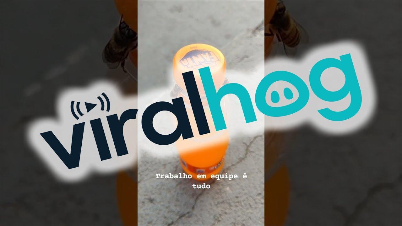 Bees Opening a Soda Bottle || ViralHog