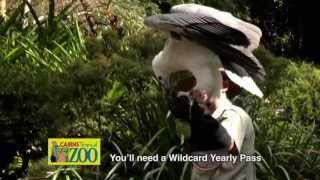 Cairns Tropical Zoo TVC - Bird Show