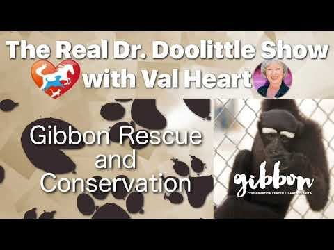 Gibbon Rescue and Conservation | The Real Dr. Doolittle Show
