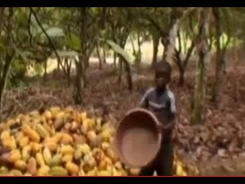 The Dark Side of Chocolate - Child Slavery