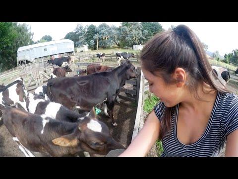 Zu Schade Fürs Arbeiten? Vom Youtuber Zur Bäuerin! :D | Neuseeland VLOG #12